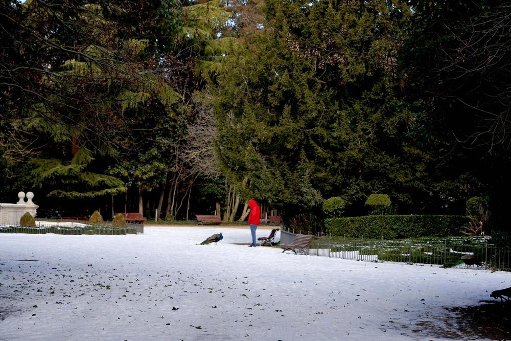 Restos de nieve y hielo en el Campo Grande de Valladolid