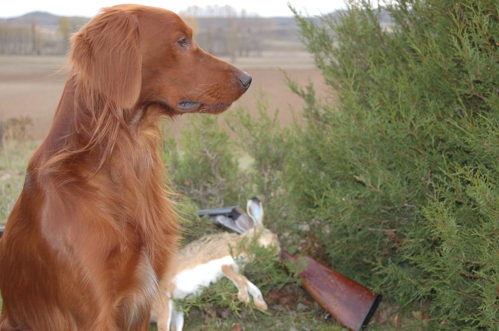 La caza arranca revuelta