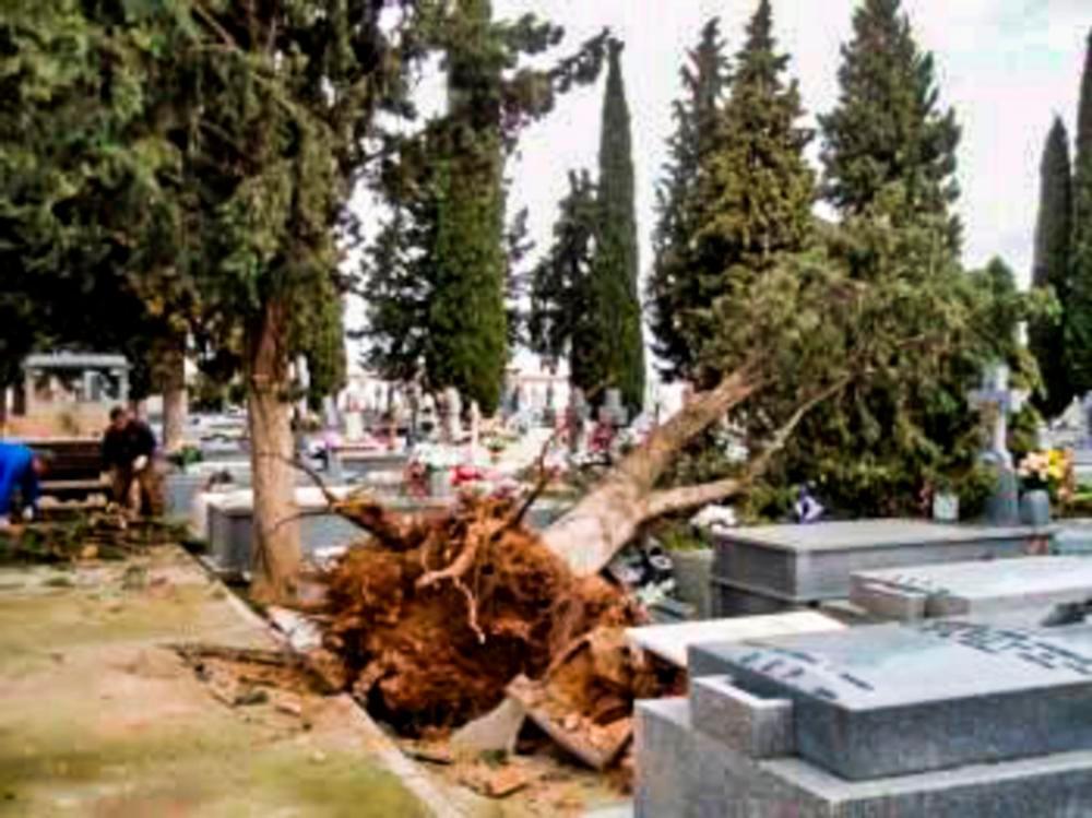 Caen tres árboles en el cementerio de Calzada por el viento
