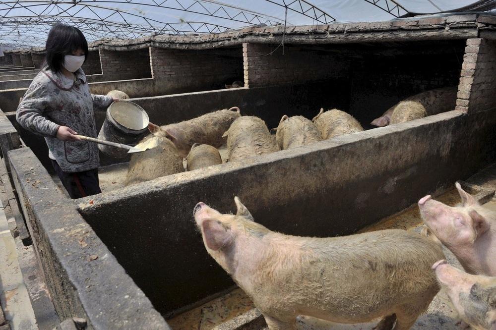 China quiere producir en 10 años el 95% del cerdo que consume