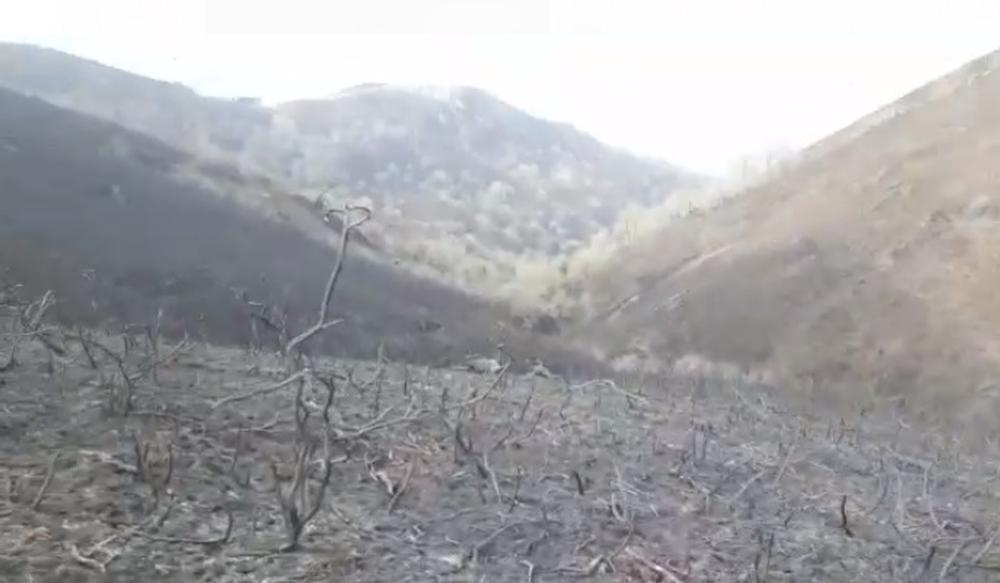 Un paisaje desolador