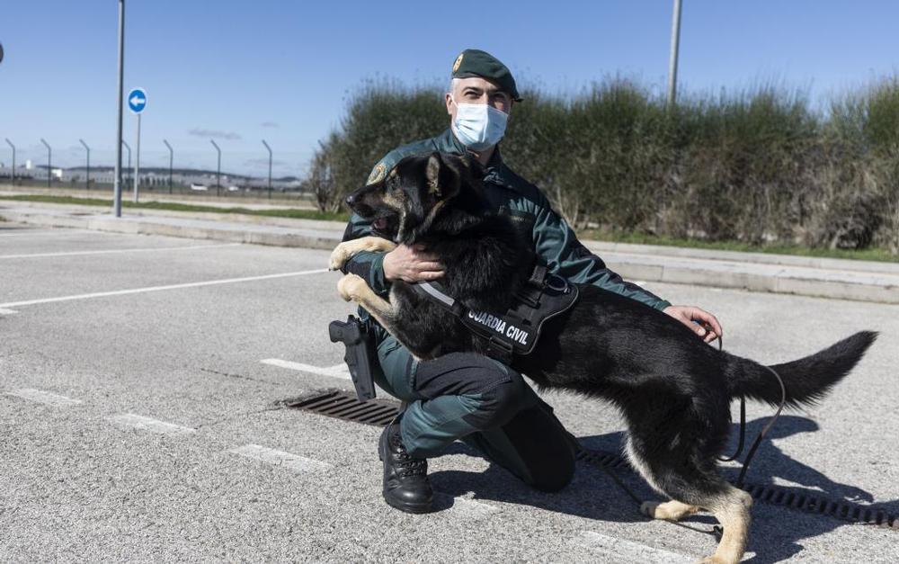 Biba se prepara junto a su guía David para ser el mejor olfato de la Guardia Civil en Burgos.