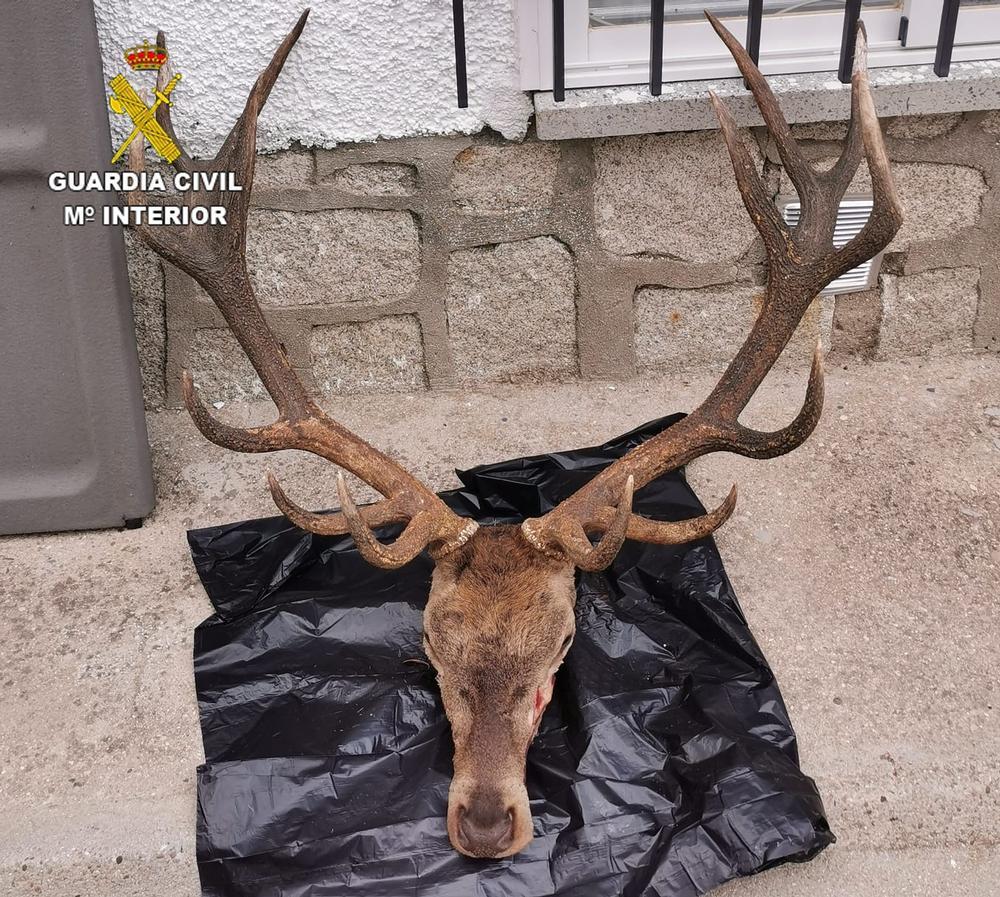 Detenidos dos furtivos con cabezas de un ciervo y un muflón