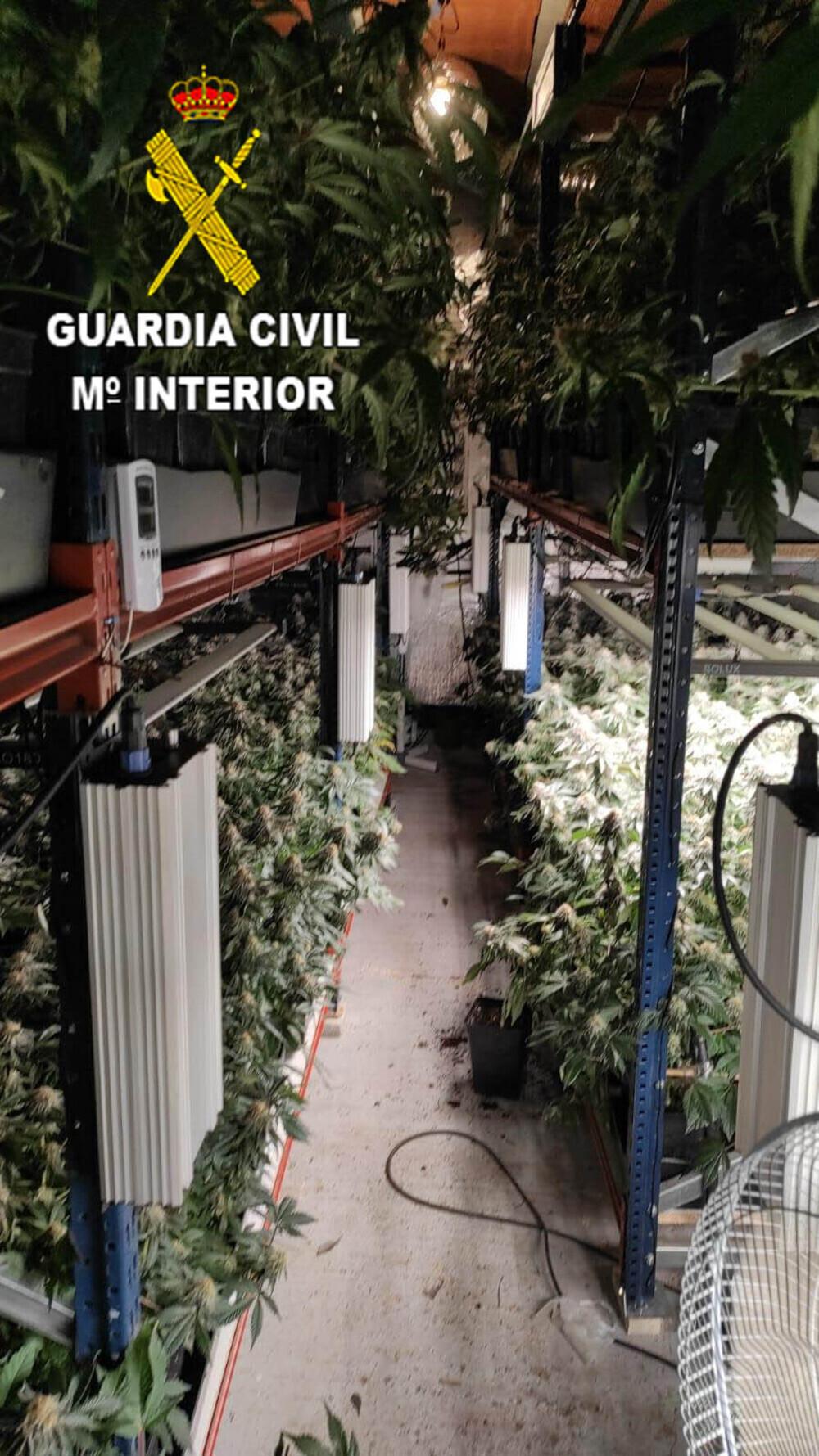 Desmantelada una plantación de marihuana en Sotolargo
