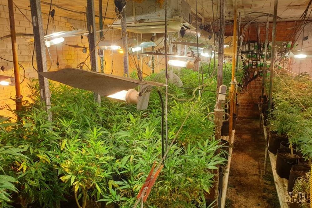 Dos detenidos y más de mil plantas incautadas en Tomelloso