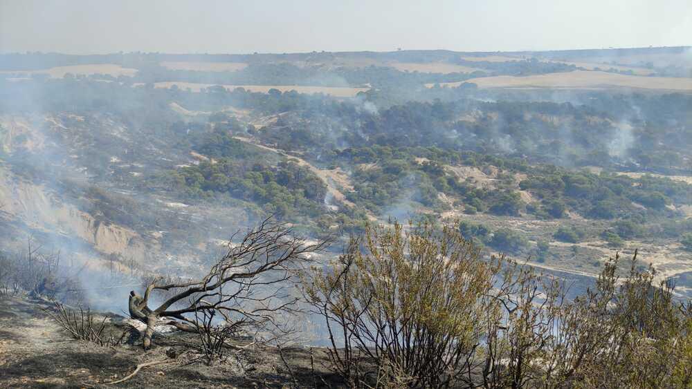 Estabilizado el incendio en el Vedado de Eguaras