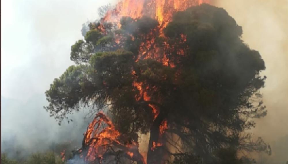 Activos 4 focos del incendio del Vedado de Eguaras