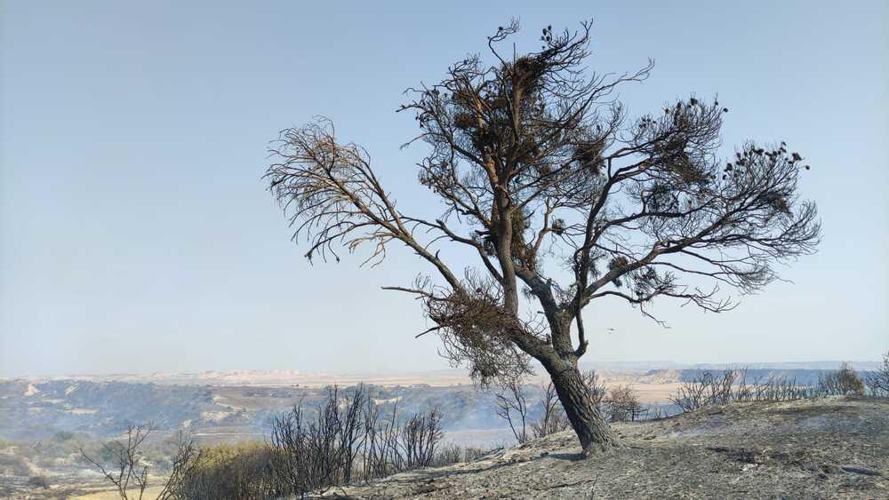 El viento reaviva el fuego en Bardenas y complica su control