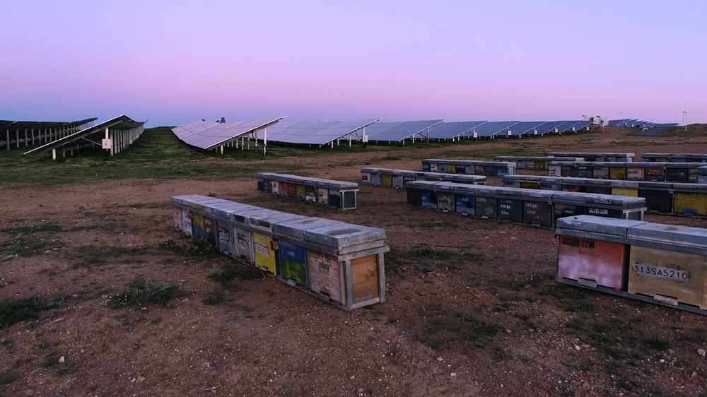 Iberdrola instala 162 colmenas en una planta fotovoltaica