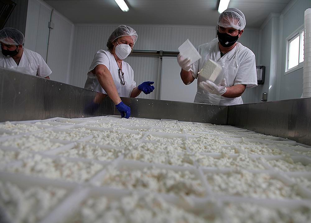 l proceso de elaboración es completamente artesanal. En la imagen, Mario y su madre volteando quesos recién hechos para facilitar que suelten bien el suero antes de aplicarles la sal.