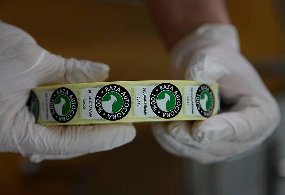 Mario es el único ganadero del mundo que cuenta con este sello, que acredita que sus quesos están hechos al 100% con leche de cabras del Guadarrama. Los demás ganaderos venden su producción completa a la industria.