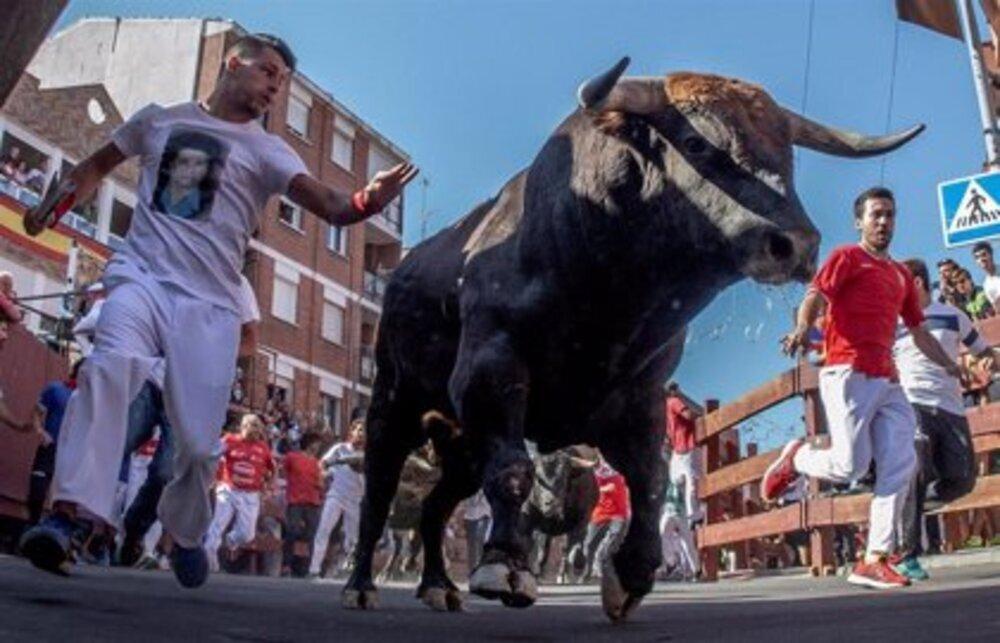 Regresan los encierros a partir del 1 de octubre en Navarra