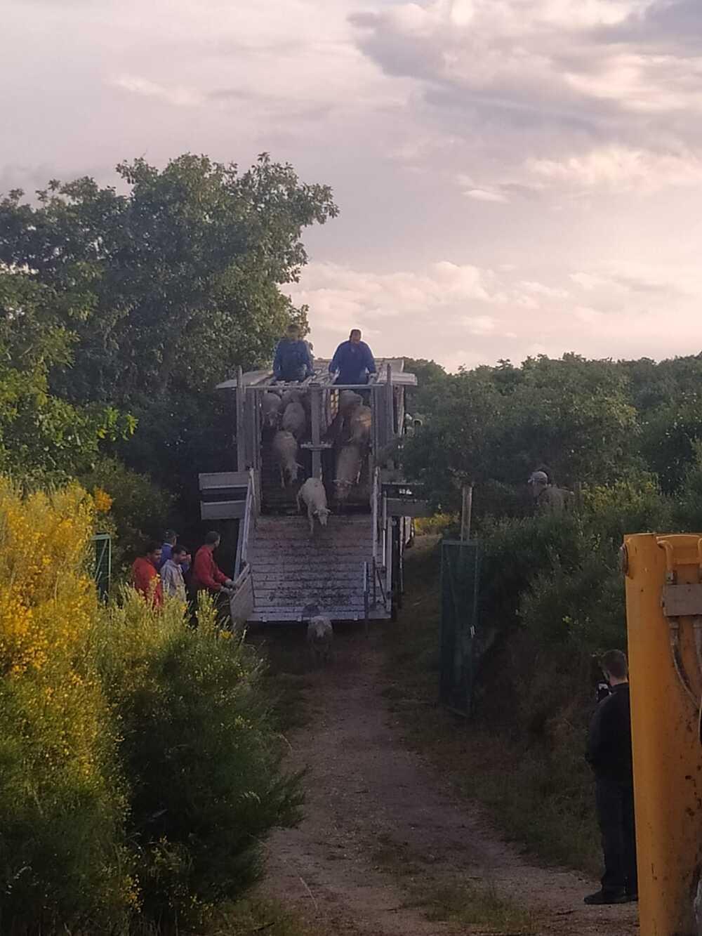 Las merinas llegan a la Montaña Palentina