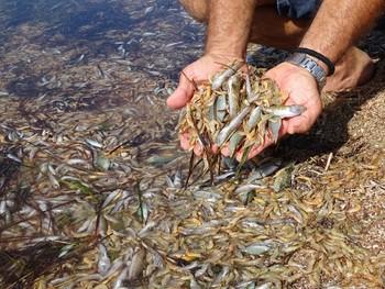 Murcia se endeudará para salvar el mar Menor