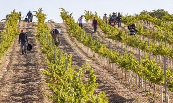 Uno de cada cuatro contratos firmados en Agricultura supone un cambio de provincia.