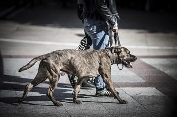 La Comunidad tiene 14.336 perros potencialmente peligrosos