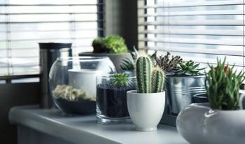Los tiestos no mejoran la calidad del aire de tu casa