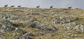 Varios ejemplares de ciervo en la Reserva Regional de Caza del Parque Natural de Fuentes Carrionas en Palencia