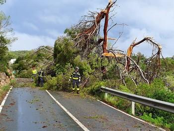 Un tornado derriba 200 árboles en una carretera de Ibiza