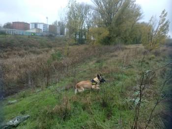 El Grem se ha unido a la búsqueda con perros de rescate.