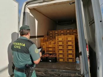 La Guardia Civil aprehende 140 kilogramos de níscalos