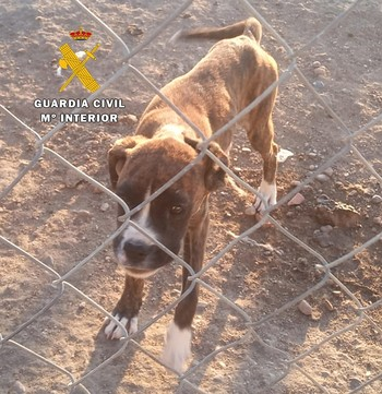 Vuelven a investigar al criadero de perros de Melgar