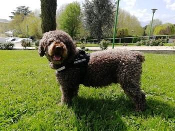 Muere Marley, el perro que ayudó en la búsqueda de Diana Quer