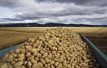 Mercadona comprará 92.000 toneladas de patatas nacionales