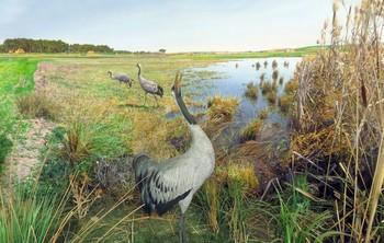 De turismo ornitológico por la Moraña y las redes sociales