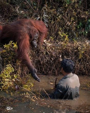 ¿Puedo ayudarte? La foto viral que protagoniza un orangután