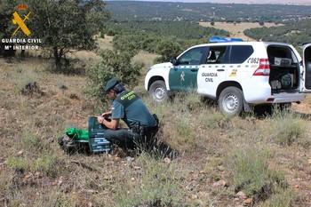 Detenido un veterinario tras hallarse 41 corzos decapitados
