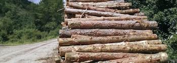 El sector de la madera y el mueble riojano exportó el año pasado por valor de 145,8 millones.