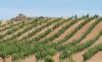 Resueltas ayudas de 31 millones para viticultores