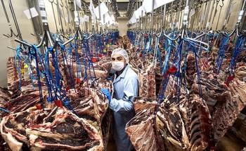 Los almacenes de Arcecarne tienen cerca de 30 toneladas de chuleteros en stock tras el cierre de hoteles, restaurantes y bares.