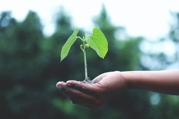Ley de Cambio Climático: en 2050, 100 por 100 renovable
