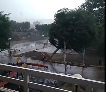 Momento en el que un árbol de gran porte se viene abajo en un parque de Santo Domingo, en una imagen de archivo.