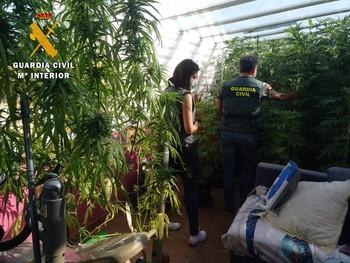 Un laboratorio 'indoor' de marihuana en un barrio anexionado