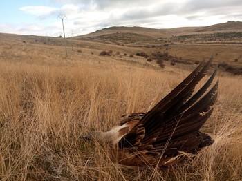 Eliminado el mayor punto de colisión de aves de la región
