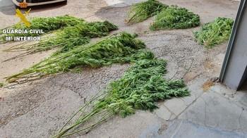Investigan a un hombre en Barajas de Melo por cultivar droga