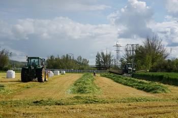 Labores de siega de la alfalfa en Tierra de Campos.