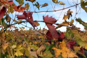 La cofradía de vino premia a Cuzcurrita
