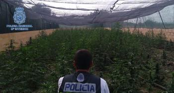 Retiran 2.915 plantas de cannabis y detienen a seis personas