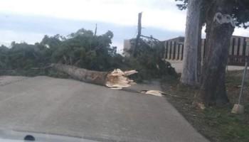 La caída un árbol obliga a cerrar el yacimiento de Numancia