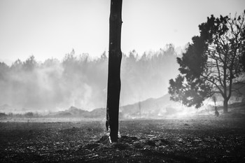 Declarada la alerta por riesgo de incendios forestales