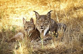 Tres especies de seres vivos se extinguen cada hora en el mundo