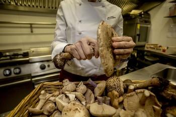 30 restaurantes y bares ofrecen tapas y menús micológicos