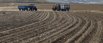 Algunos agricultores optan por no sacar las patatas de la tierra para no aumentar las pérdidas.