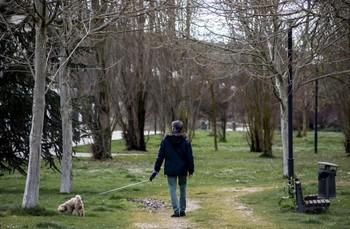 El Ayuntamiento emitió el pasado día 24 un bando limitando a 250 metros del domicilio el paseo de los perros.