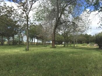Concluyen en Puertollano las actividades de la Semana Verde