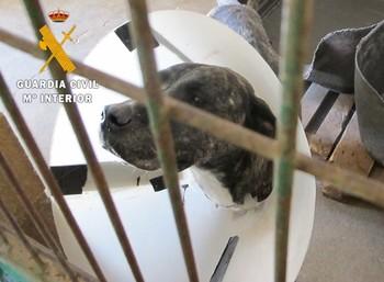 Un perro abandonado por su dueño y acogido por la protectora de animales.